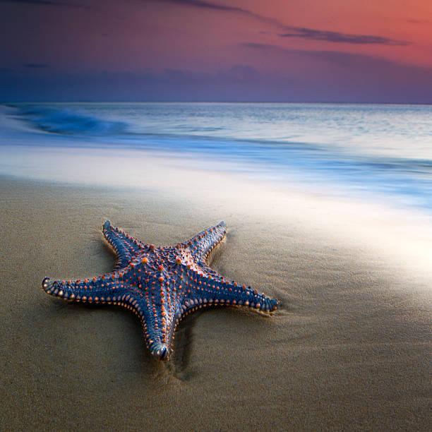 Single Sea Star
