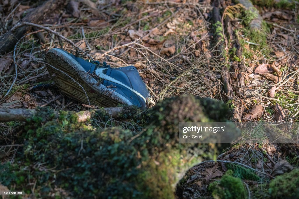 Japan's Suicide Forest : News Photo