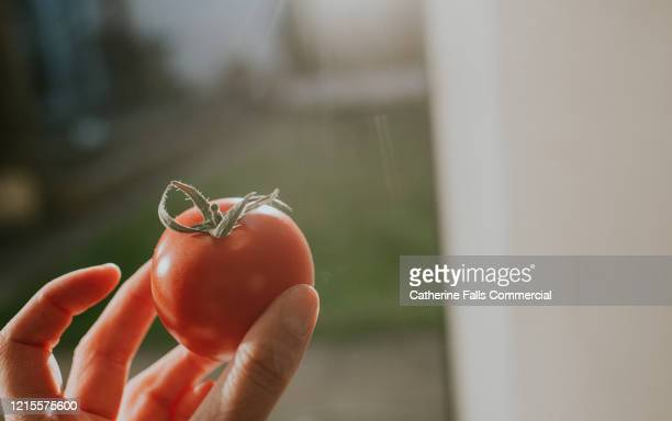 single tomato - finger stock pictures, royalty-free photos & images