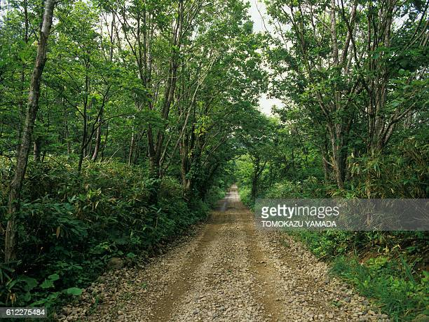 Single Track in Forest