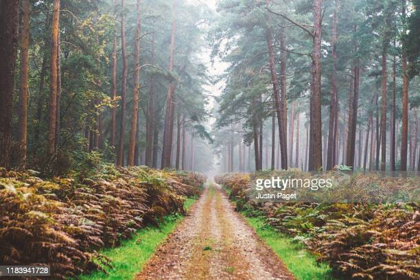 single track in misty forest - woodland stock pictures, royalty-free photos & images