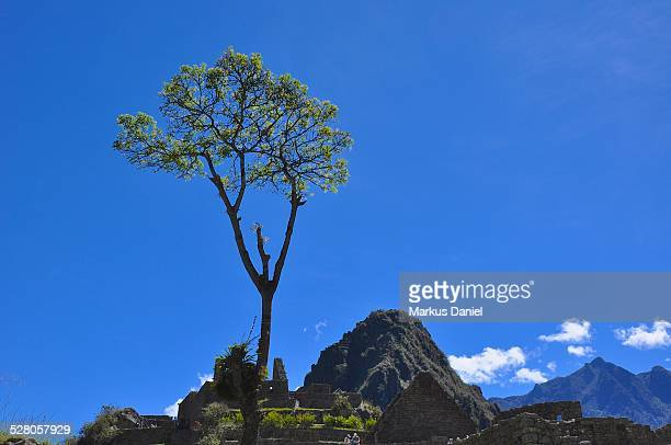 Single Tree and Huayna Picchu