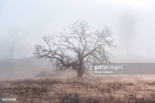 Single tree and mist cover in winter season