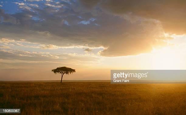 Single tree at sunset, Masai Mara