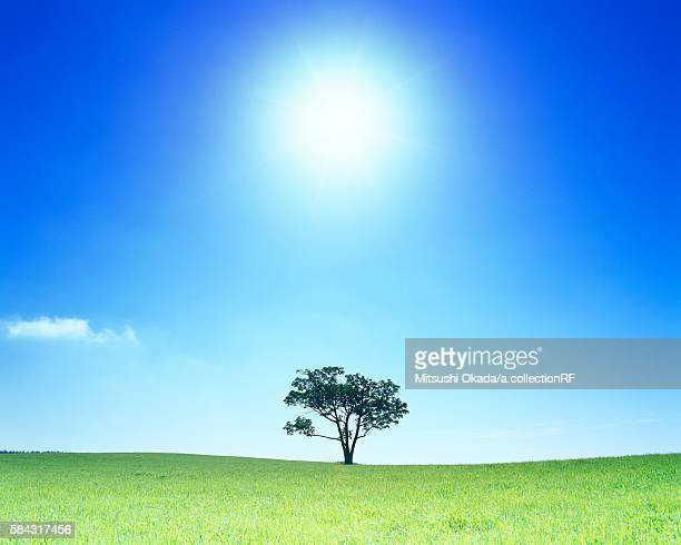 Single tree in a pasture