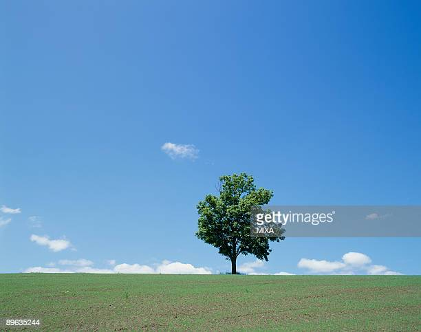 Single Tree in Green Field
