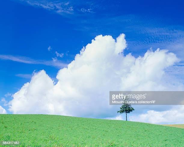 Single tree in pasture