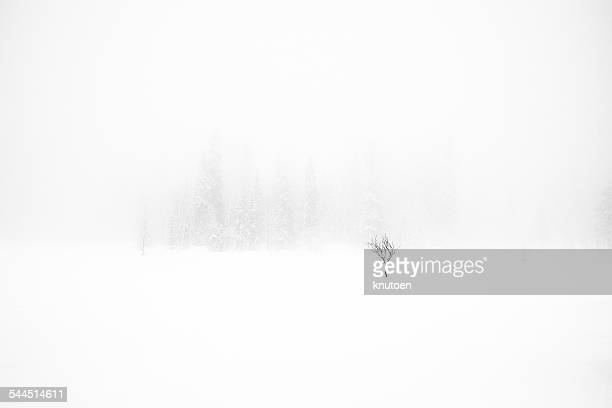 single tree in snow storm - blizzard stock pictures, royalty-free photos & images