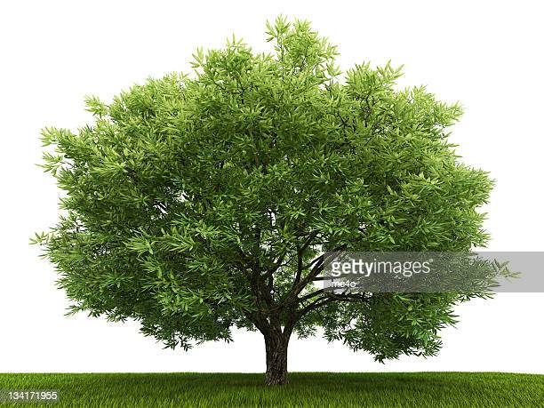 single tree in the field - illustration stock pictures, royalty-free photos & images