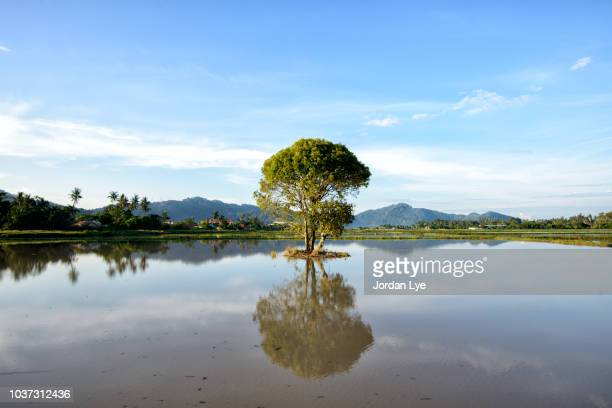 A single tree in the lake with the reflection