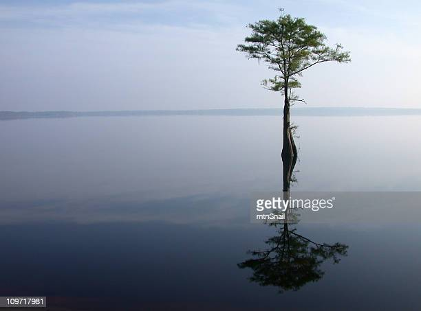 Single tree in the middle of a lake
