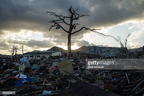 A single tree is seen standing amid the rubble in Tacloban City following the recent super typhoon on November 18 2013 in Leyte Philippines Typhoon...
