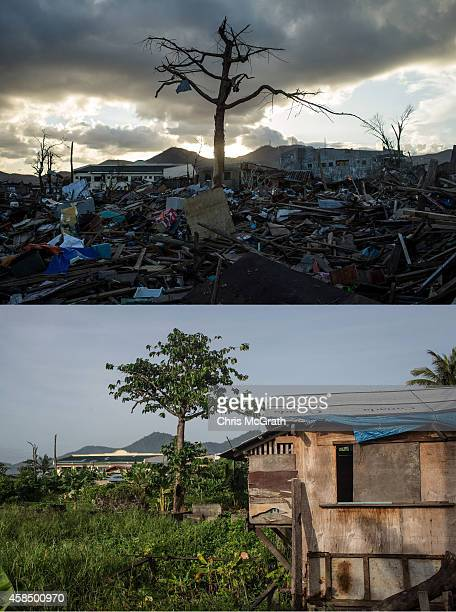 Single tree is seen standing amid the rubble in Tacloban City following the recent super typhoon on November 18, 2013 in Leyte, Philippines. View of...