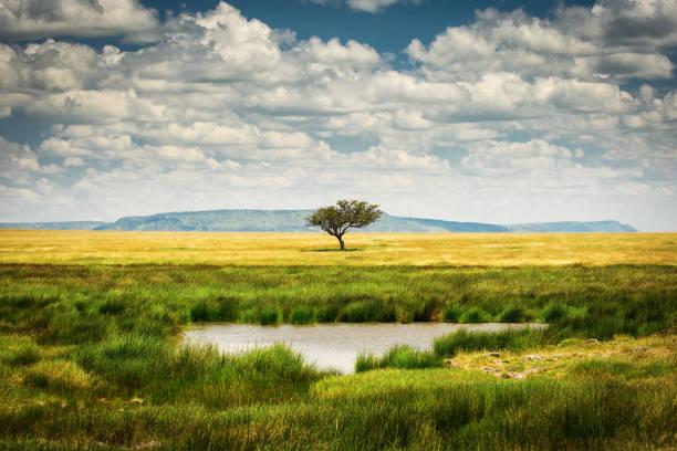 Single Tree Near A Lake - Fine Art prints