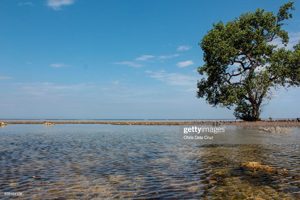 Single tree on a clear water beach : Stock Photo