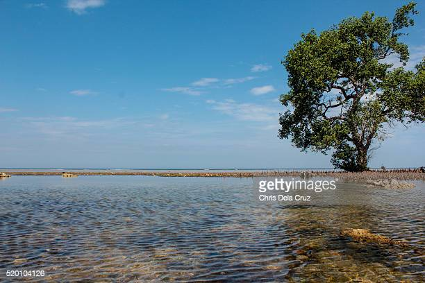Single tree on a clear water beach