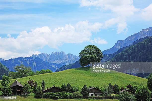 Single tree on a hill