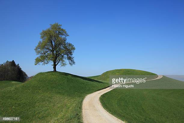 Single tree on a hill