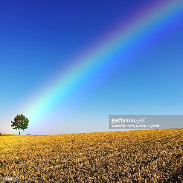 Single Tree On Field Against Sky With Rainbow