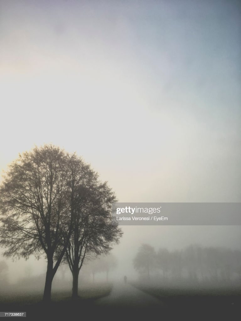 Single Tree On Landscape Against Clear Sky : Stock Photo