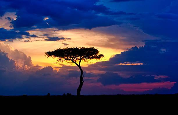 Single tree on savannah at sunset, Maasai Mara National Reserve, Kenya