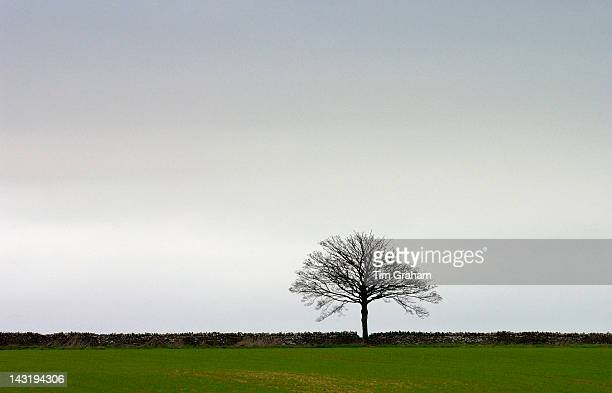 A single tree on the horizon of a StowontheWold landscape Oxfordshire