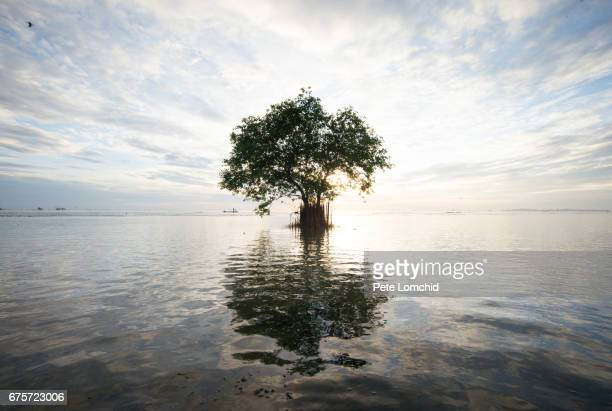 single tree on the water