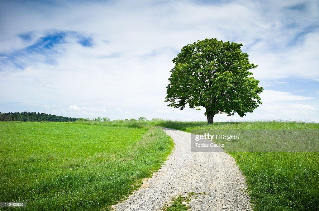 Single tree : Stock-Foto
