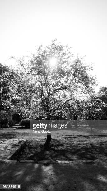 Single Tree Silhouette - Monochrome