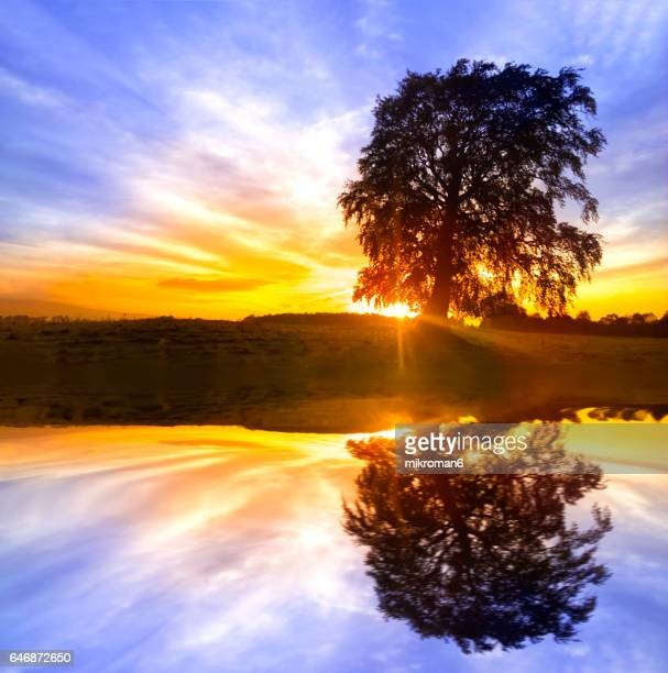single tree sunrise reflection - spiritual enlightenment stock pictures, royalty-free photos & images