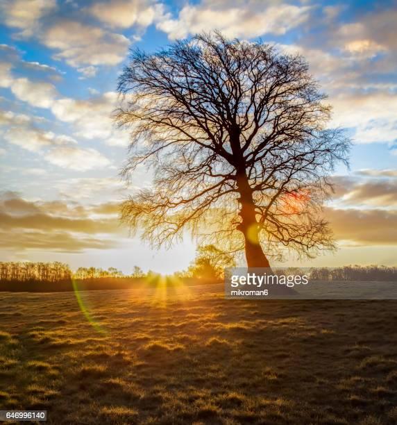 Single tree Sunrise reflection