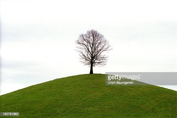 Single tree without leaves on a hill