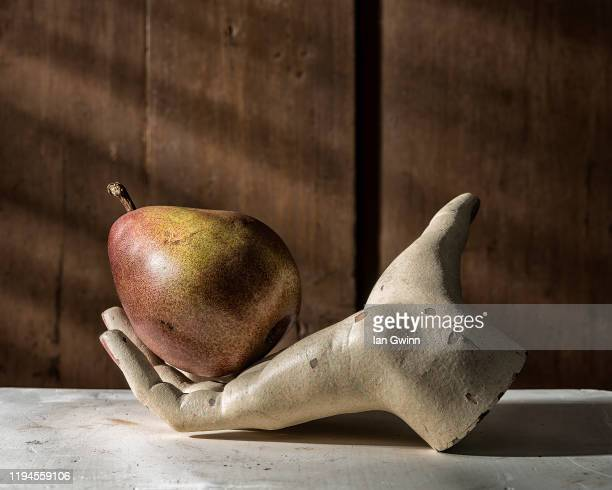 single unbitten pear in mannequin hand - ian gwinn stockfoto's en -beelden