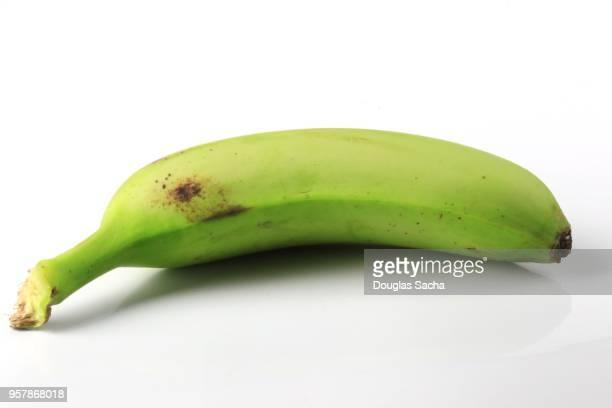 Single unpeeled Plantain type banana on a white background (Musa × paradisiaca)