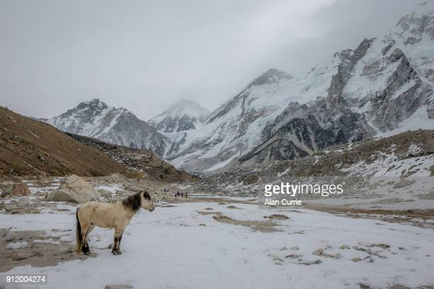 Single white horse stands in cold mountain range at Mount Everest base camp