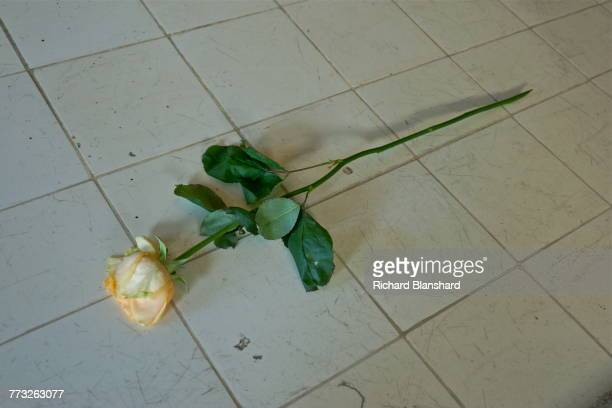 A single white rose on a dissection table in the pathology department in the crematorium building at the Buchenwald German Nazi concentration camp...
