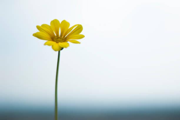 Single Yellow Daisy On Sky And Sea Wall Art