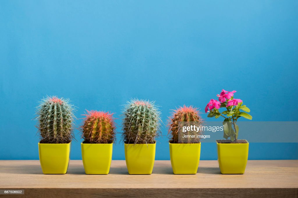 Singled Out : Stock Photo