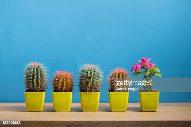 singled out - group of objects stock photos and pictures