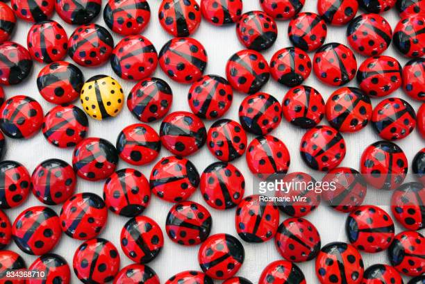 singled out: single yellow ladybird among a crowd of red ones - ladybug stock pictures, royalty-free photos & images