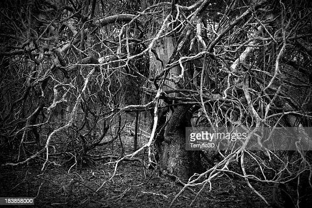 sinister and spooky tangle of vines and tree branches - terryfic3d bildbanksfoton och bilder