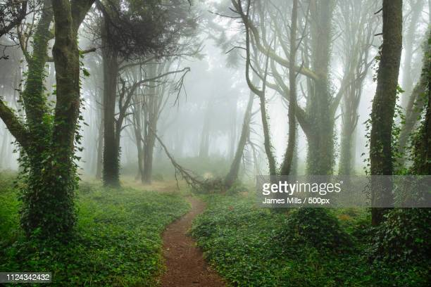 sintra dreams - sintra stock pictures, royalty-free photos & images