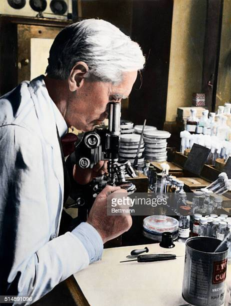 Sir Alexander Fleming discoverer of penicillin at a microscope in his laboratory at St Mary's Hospital London Halflength profile portrait seated...