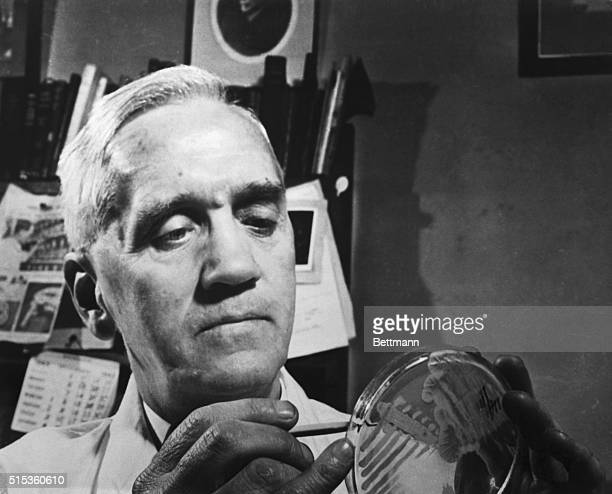 Sir Alexander Fleming discoverer of penicillin in his laboratory at St Mary's Hospital Paddington Scotland There in 1928 he first saw under his...
