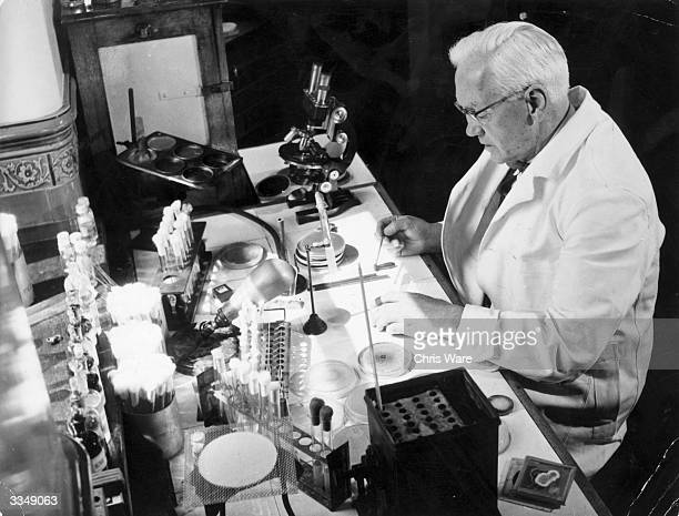 Sir Alexander Fleming noted bacteriologist and joint winner of the 1945 Nobel Prize for Medicine at work in his laboratory in the WrightFleming...