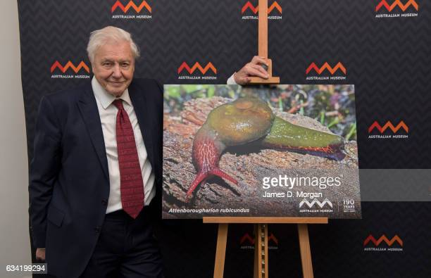 Sir David Attenborough at the Australian Museum with a photo of the Attenborougharion rubicundus a snail 3545mm long found only in Tasmania named...
