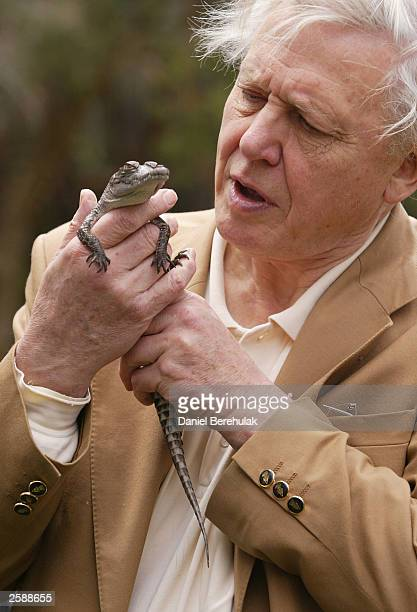 Sir David Attenborough holds a baby salt water crocodile during a photo opportunity at Taronga Park Zoo October 13, 2003 in Sydney, Australia....