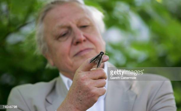 Sir David Attenborough launches National Moth Recording Scheme at London Zoo on May 2 2007 in London The scheme is run by Butterfly Conversation...