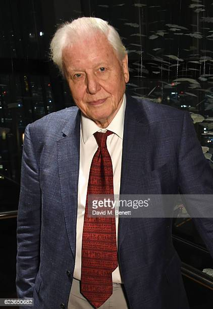 Sir David Attenborough unveils the Christmas Installation at Aqua Shard on November 16 2016 in London England