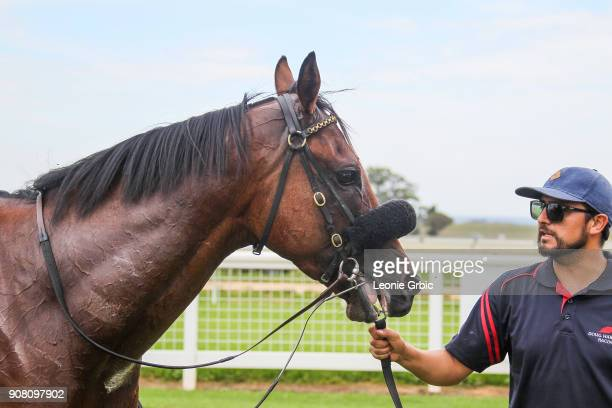 Sir Kalahad after winning the njt20cricketcomau Maiden Plate at Sale Racecourse on January 21 2018 in Sale Australia